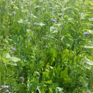 Wesco Seeds sell specially blended grass seed mixes in New Zealand