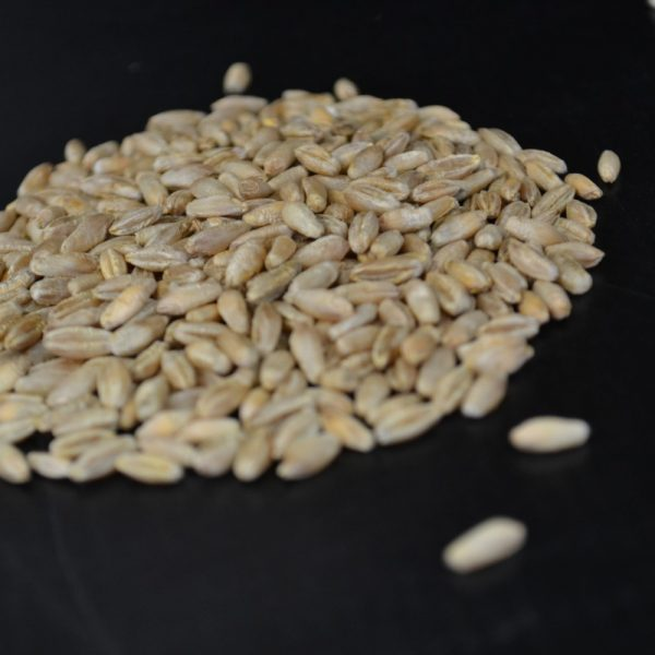 Wesco Seeds sell bulk grass seed online for farmers in New Zealand