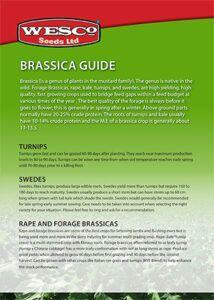 Brassicas_Brochure-1