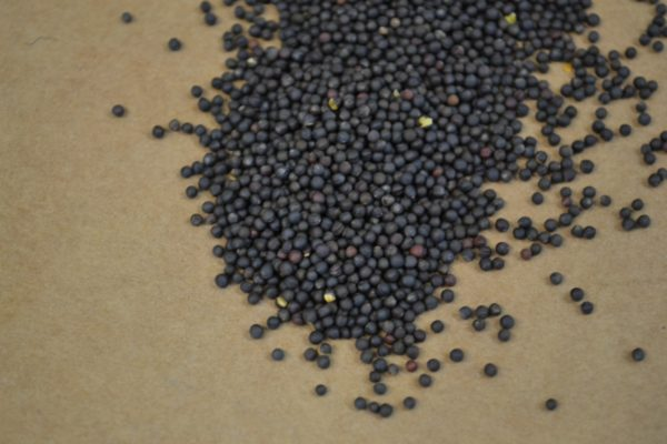 Wesco Seeds sell Liquid fertiliser to boost agricultural production online
