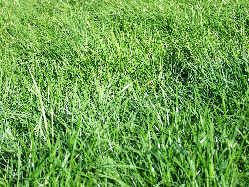 how to choose grass seed type