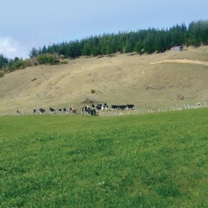 Premium Bushburn is a grass seed mixture with Italian ryegrass in the mix sold by Wesco Seeds in the South Island in New Zealand