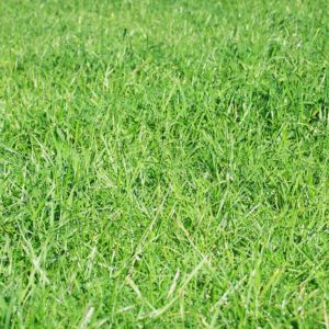 Stamina is a grass seed type that We sell it also can be used as lawn seed and Pasture seed