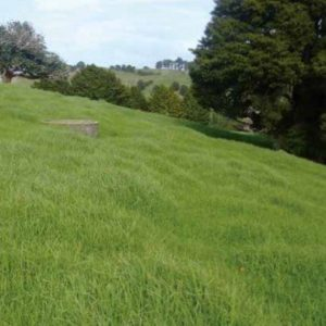 Wesco Seeds sells Italian Mulching Mix which is a seed mixture. This is excellent for autumn and spring pasture boost, great for North Island climates in New Zealand