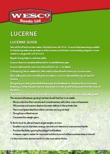 lucerne-guide