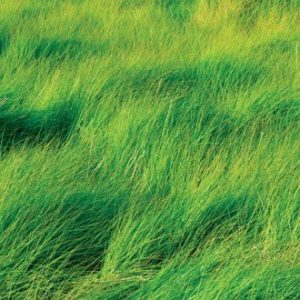 Wesco sells Grass seed such as Timothy which is a type of perennial ryegrass which is nutrient rich and high yielding.
