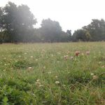Wesco Seeds ltd sell grass seed and organic grass seed types online