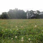 Buy bulk clover seed online at Wesco Seeds Ltd. in New Zealand