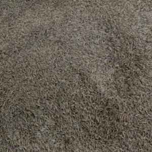 Wesco seeds sell bulk grass seed online we are located in the South Island in New Zealand