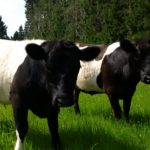 Buy pasture seed grass seed kale seed and lawn seed online at Wesco seeds