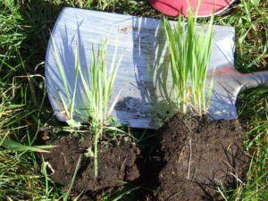 Wesco Seeds sell liquid fertiliser online
