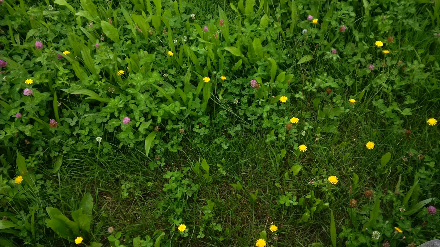 Wesco Seeds sell grass seed and clover seed, pasture seed and lawn seed online
