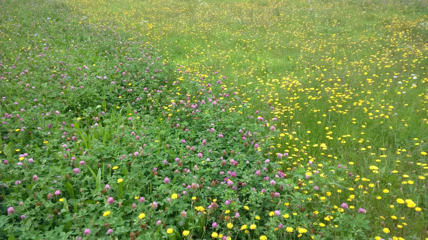 Wesco sells grass seed, lawn seed, pasture seed and clover seed