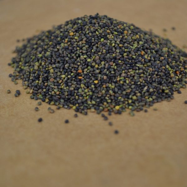 Buy organic clover seed and grass seed bulk online at Wesco Seeds