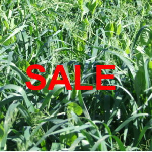 Pasture seed going cheap online at Wesco Seeds