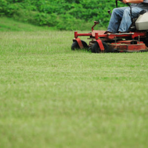 Lawn Seed & Lawn Seed Mixes